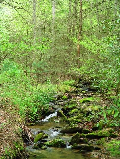 creek-at-stone-mtn