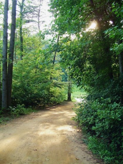 Sun on Trail